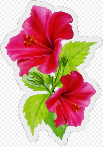 flower flowering plant hibiscus hawaiian hibiscus petal png image transparent background