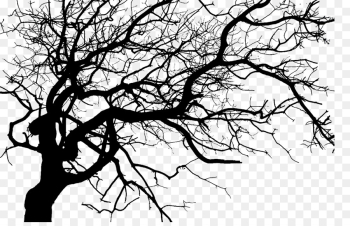 Twig, Tree, Silhouette, Branch PNG png image transparent background