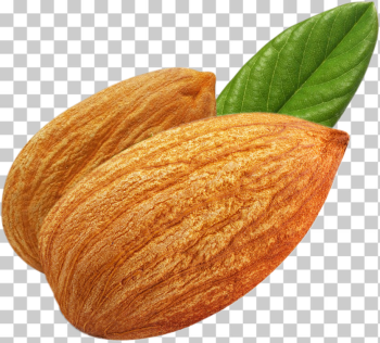 High resolution Almond PNG