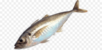 Papua New Guinea Fishing Fish as food - Fish Png Image  png image transparent background