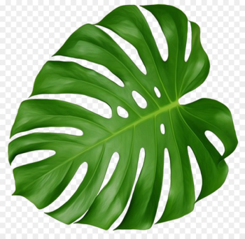 Swiss cheese plant Leaf Houseplant Plant Leaves - leafy flowers  png image transparent background