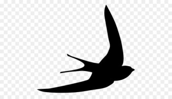 Bird Common swift Computer Icons Swallow Clip art - albatross  png image transparent background