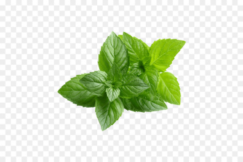 Chewing gum Peppermint Mentha spicata Organic food Water Mint - pepermint  png image transparent background