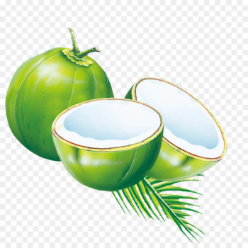 Coconut water Coconut milk powder Es kelapa muda - Cyan Coconut  png image transparent background