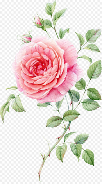 Still Life: Pink Roses Watercolor painting - Watercolor painted pink roses  png image transparent background