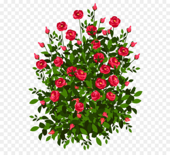 Drawing Rose Paper Art - Red Rose Bush PNG Clipart Picture  png image transparent background