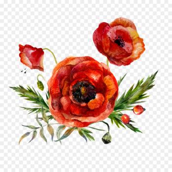 Watercolor painting Flower Poppy - Watercolor flowers  png image transparent background