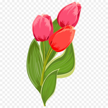 International Womens Day Quotation Happiness Woman Wish - Bouquet of red tulips  png image transparent background