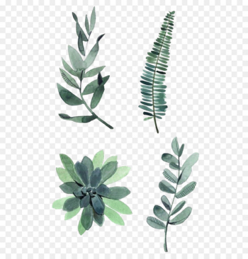 Watercolor painting Drawing Plant Illustration - Watercolor leaves  png image transparent background