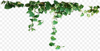 Plant Vine Clip art - Plants Transparent PNG  png image transparent background