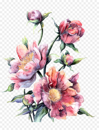 Flower Watercolor painting Floral design Printing - Watercolor pink peony in full bloom  png image transparent background