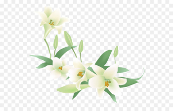 Flower Jasmine Euclidean vector Clip art - White lily  png image transparent background