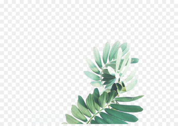 Leaf Watercolor painting Arecaceae - Watercolor Leaves  png image transparent background