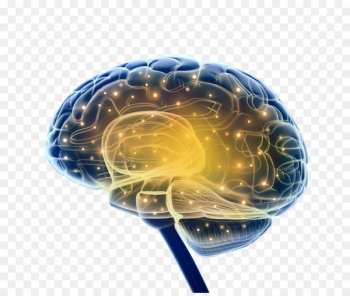Brain Research Neuroscience Nervous system - neurons  png image transparent background