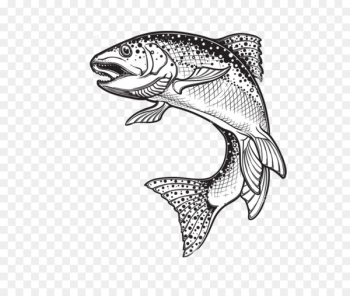 Rainbow trout Drawing Sketch Vector graphics Illustration - fish  png image transparent background