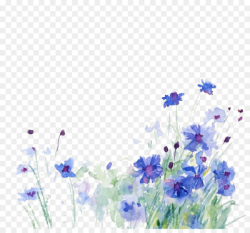 Cornflower Watercolor painting Illustration - Blue flowers  png image transparent background