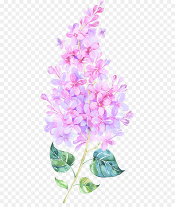 Watercolor: Flowers Watercolor painting Clip art Watercolour Flowers - hyacinth flower  png image transparent background