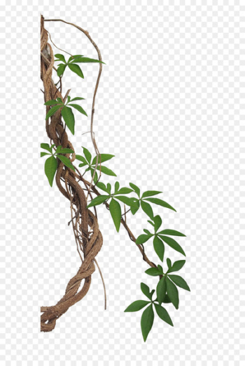Vine Liana Tropical rainforest Stock photography Jungle - jungle  png image transparent background