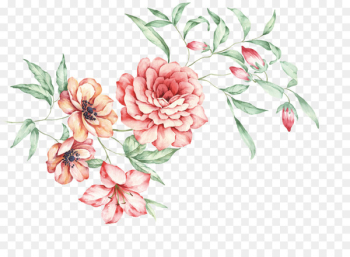 China Floral design Moutan peony - Hand-painted Chinese peony  png image transparent background
