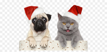 Cat Dog Santa Claus Christmas Pet - Christmas,Halloween,Christmas hats  png image transparent background