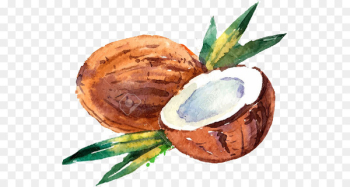 Coconut milk Coconut water Drawing Watercolor painting - coconut  png image transparent background