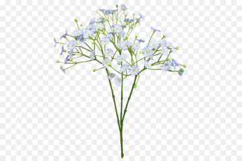 Cut flowers Baby's-breath Blue Flower bouquet - baby breath  png image transparent background