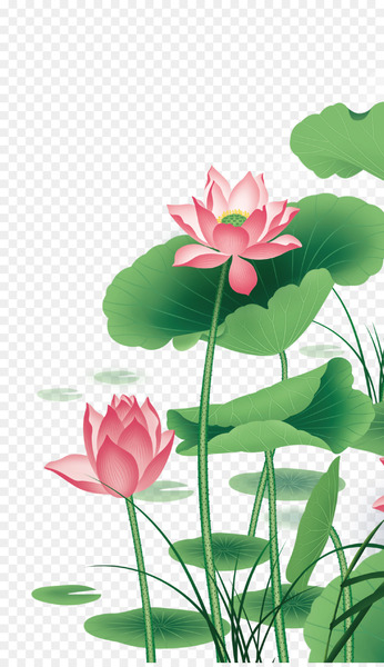 Nelumbo nucifera Euclidean vector - Lotus Vector  png image transparent background