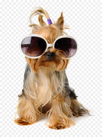 Dog Birthday Puppy Pet sitting Greeting card - Shaggy Dog  png image transparent background