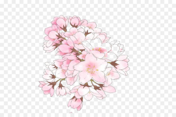 Cherry blossom Illustration Image Drawing - pink cherry blossom  png image transparent background