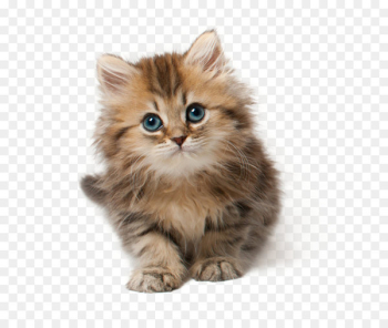 Cat Kitten Cuteness Clip art - Cat Png 9  png image transparent background