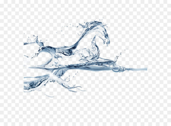 Water horse Wallpaper - Horse in water  png image transparent background