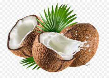 Coconut milk Coconut water Nata de coco Coconut oil - coconut  png image transparent background