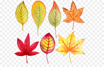 Leaf Watercolor painting Autumn - Vector watercolor leaves  png image transparent background