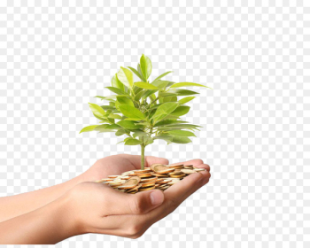 Money Plant Stock photography Coin - Hands holding gold coins fat tree high-definition deduction material  png image transparent background