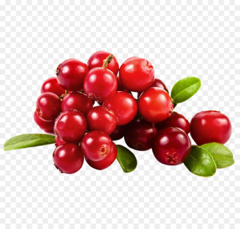 Cranberry juice Fruit - Cherry png picture material  png image transparent background