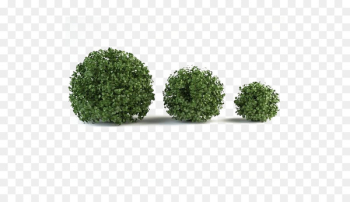 Shrub Box 3D modeling Mountain pine Tree - Green grass  png image transparent background