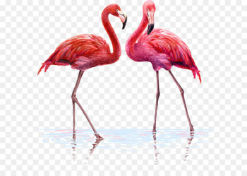 Flamingo Wall decal Tapestry Interior Design Services - One pair of flamingos  png image transparent background