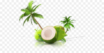 Coconut water Coconut milk Thai cuisine Juice - juice  png image transparent background
