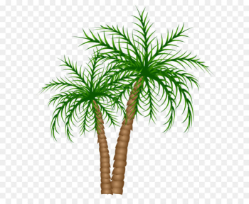 Asian palmyra palm Text Branch Date palm Leaf - Palm Trees PNG Clipart Picture  png image transparent background