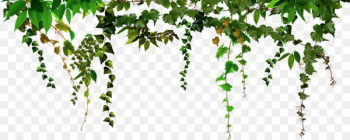 Portable Network Graphics Picture Frames PhotoFiltre Photograph Decoratie - Hanging leaves  png image transparent background