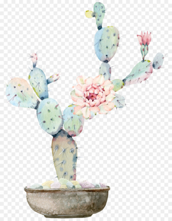 Watercolour Flowers Watercolor painting Cactaceae Drawing - Water color flower, green plant cactus  png image transparent background