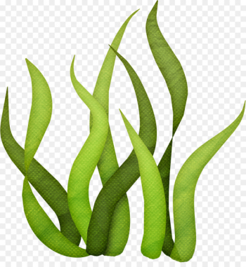 Seaweed Drawing Clip art - under sea  png image transparent background