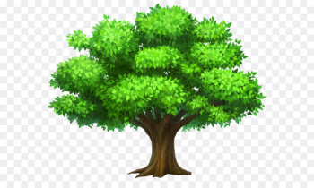 Tree Oak Clip art - Oack Tree PNG Clipart Picture  png image transparent background