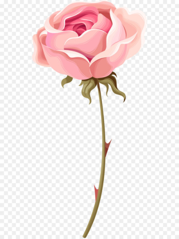 Garden roses Beach rose Centifolia roses Pink - Hand painted watercolor pink roses  png image transparent background