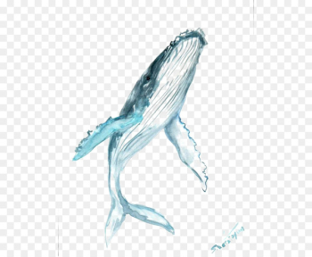 Humpback whale Drawing Watercolor painting Clip art - blue whale  png image transparent background