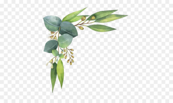 Eucalyptus polyanthemos Royalty-free Watercolor painting Illustration - Watercolor leaves  png image transparent background