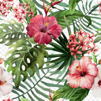 Shoeblackplant Flower Hawaiian hibiscus Drawing - Red hibiscus flower vector material  png image transparent background