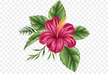 Hawaii Shoeblackplant Drawing Flower bouquet - Hand painted hibiscus flower  png image transparent background