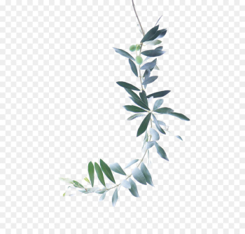 Watercolor painting Olive branch - Green Leaves  png image transparent background