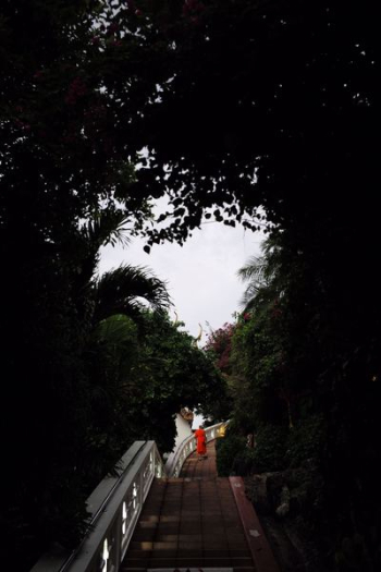 person walking on bridge in between trees at daytime png image transparent background